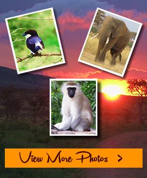 Tailor Made Safari