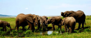 "Tsavo East National Park- ""Theatre of the Wild"""