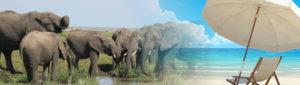 04 Days Tarangire Lake Manyara and Lake Eyasi Safari