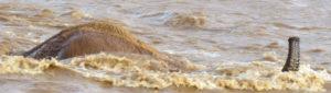 05 Days Lake Manyara Serengeti and Ngorongoro Safari