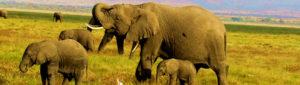 Meru National Park – Complete Wilderness