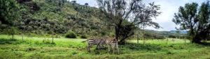 5 Days Mt. Kenya Climbing Safari – Narumoru Chogoria Route