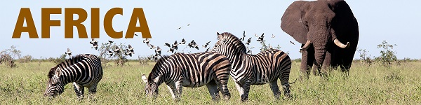 Kenya tours & safaris